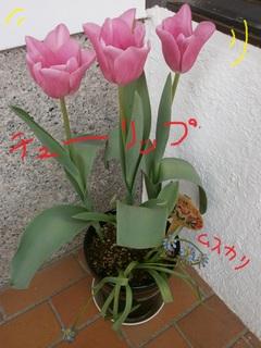 4.18チューリップ咲.jpg