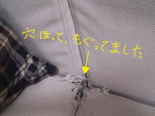 ハッピーの巣.jpg