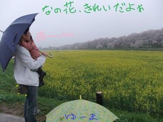 権現堂菜の花.jpg