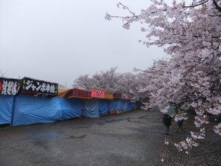 権現堂4.JPG