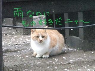 権現堂8.JPG